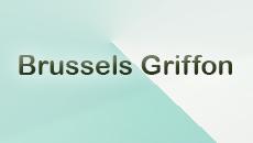 پرورش دهندگان نژاد  Brussels Griffon