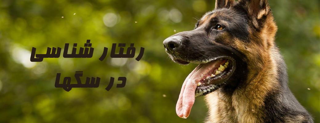 رفتار سگها