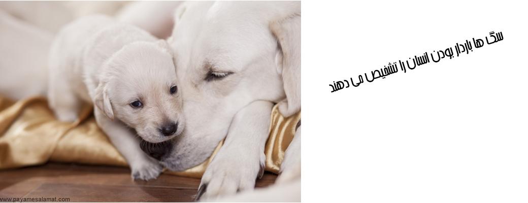 تشخیص بارداری توسط سگ ها