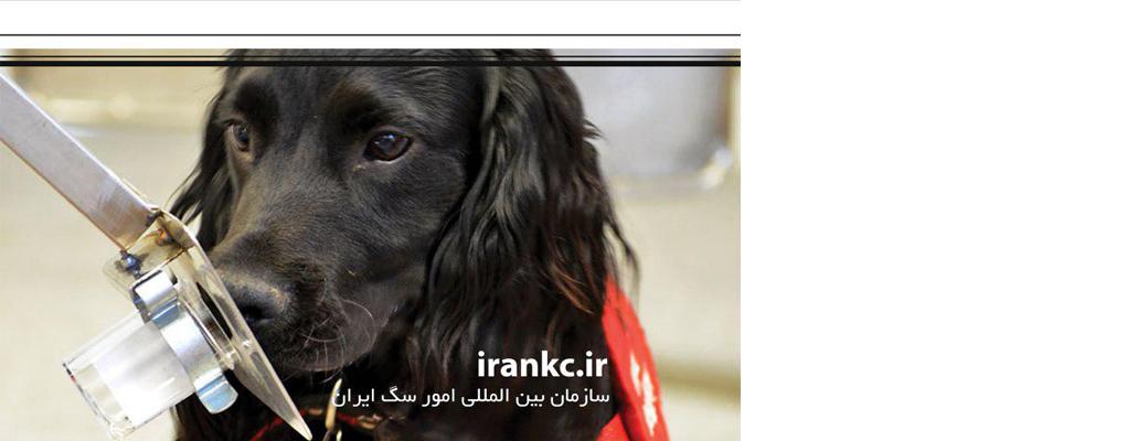 توانایی بالای سگ ها در تشخیص سرطان