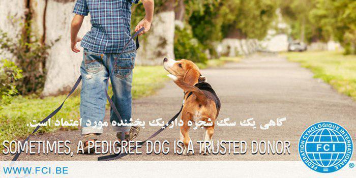 سگ کار