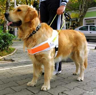 سگ همراه